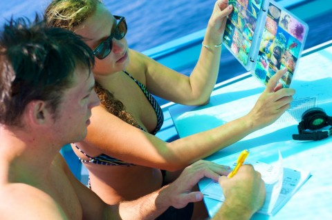 Koh Tao diving instructor course