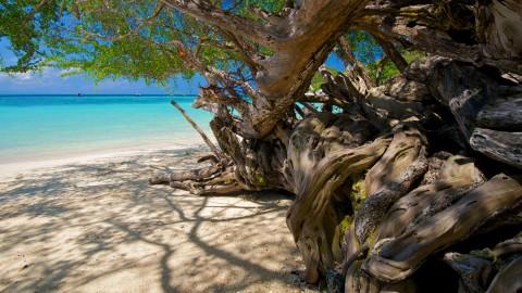 สัตว์ป่าและพรรณพืชบนเกาะเต่า