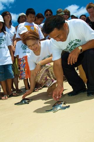 Koh Tao environmental - releasing turtles