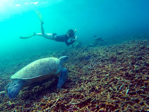 Koh Tao Snorkelling with Green Turtle