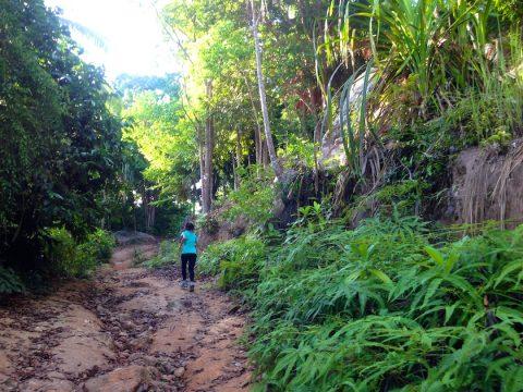 เส้นทางเดินป่าเกาะเต่า หาดทรายรี-อ่าวโตนด