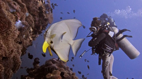 Koh Tao attractions - Dive Sites