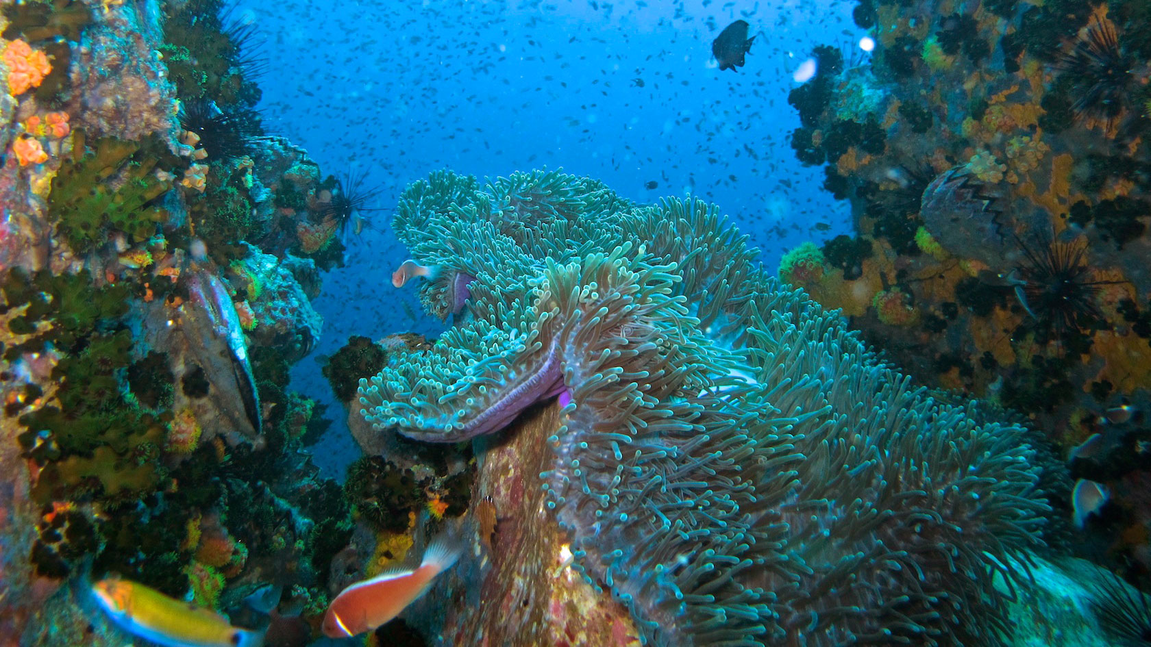 Koh tao dive sites koh tao a complete guide - Dive in koh tao ...
