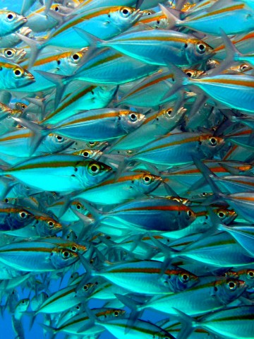 Mango Bay Koh Tao dive sites