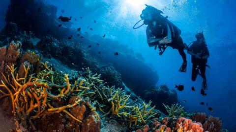 Scuba Diving Koh Tao