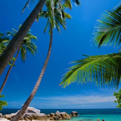 หาดทรายนวล เกาะเต่า