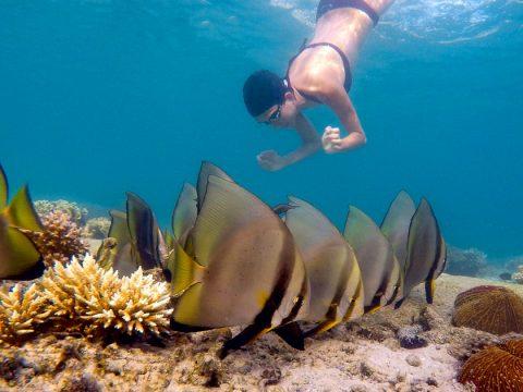 Koh Tao Snorkelling ay Sai Nuan Beach