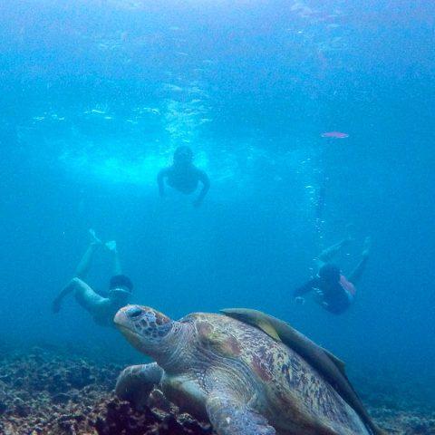 Snorkelling Sai Nuan Beach, Koh Tao with Green turtle