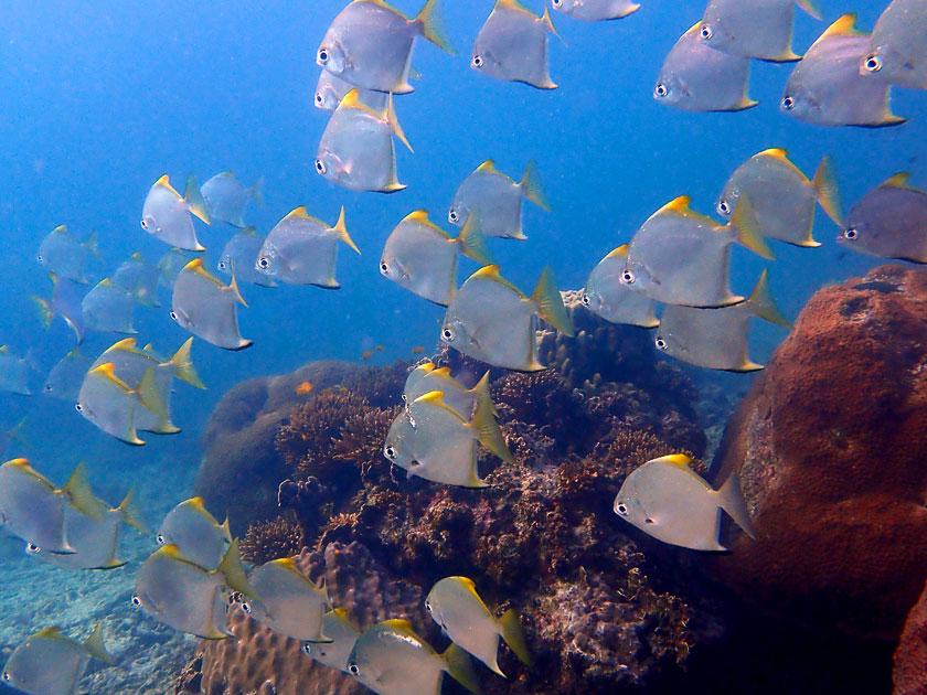 Underwater at Chalok Baan Kao Bay, Koh Tao