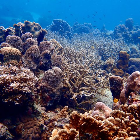 Underwater of Hin Ngam Bay, Koh Tao
