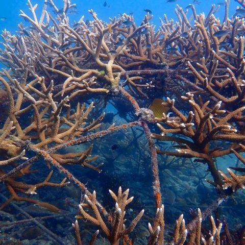 Artificial reef in Chalok Baan Kao Bay, Koh Tao