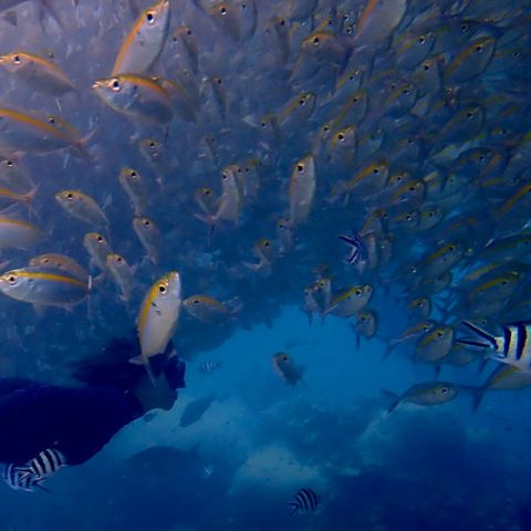 Underwater of Hin Wong Bay, Koh Tao