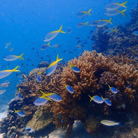 Underwater of Aow Leuk, Koh Tao