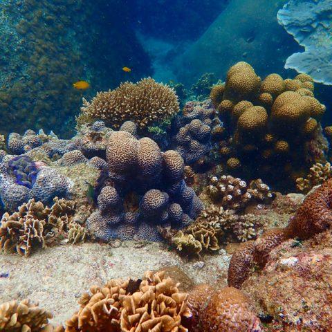 Underwater of Laem Thian, Koh Tao