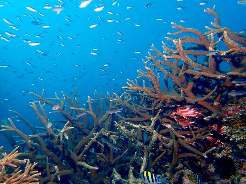 Underwater of Tanote Bay, Koh Tao