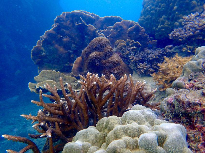 Underwater of June Juea Bay, Koh Tao