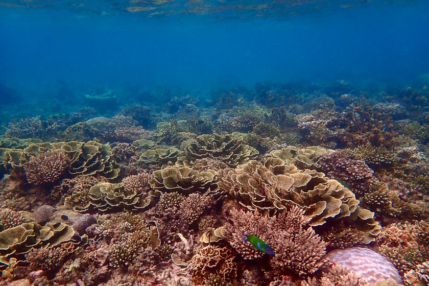 Hard corals at June Juea Bay, Koh Tao