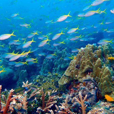 Underwater of Lang Khai Bay, Koh Tao