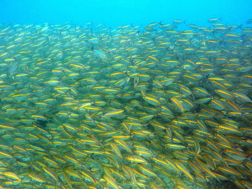 Underwater at Jansom Bay, Koh Tao