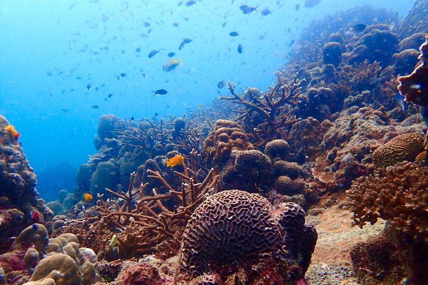 Underwater of Lighthouse Bay, Koh Tao