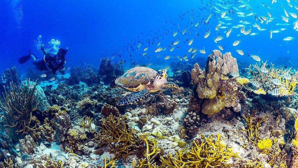 ดำน้ำสกูบาที่เกาะเต่าเจอเต่าทะเล