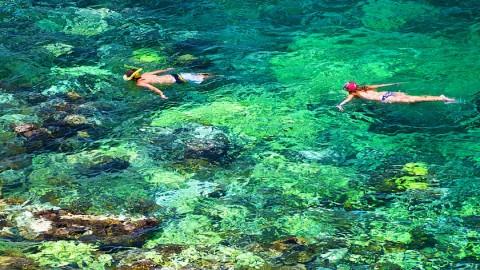 ดำน้ำตื้นที่เกาะเต่า