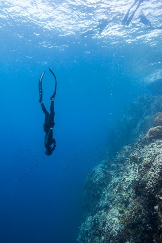Koh Tao Freediving