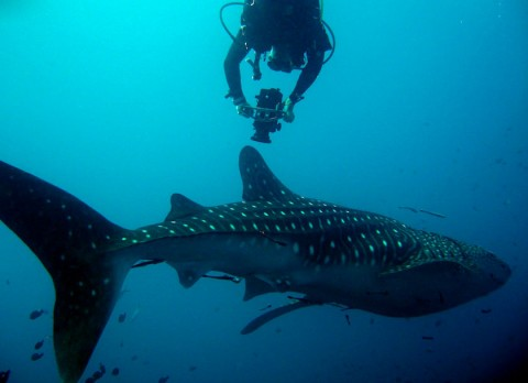 Koh Tao courses of Underwater Videography
