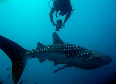 หลักสูตรถ่ายภาพนิ่งและวีดีโอใต้น้ำที่เกาะเต่า