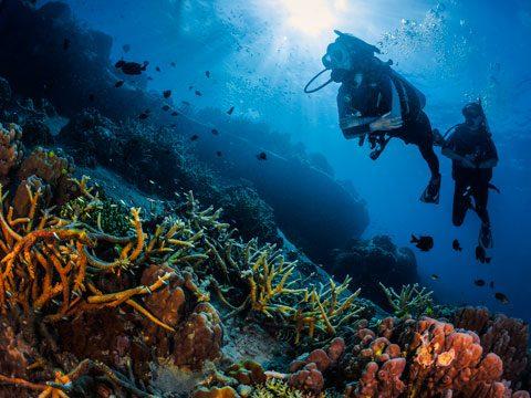La plongée à Koh Tao