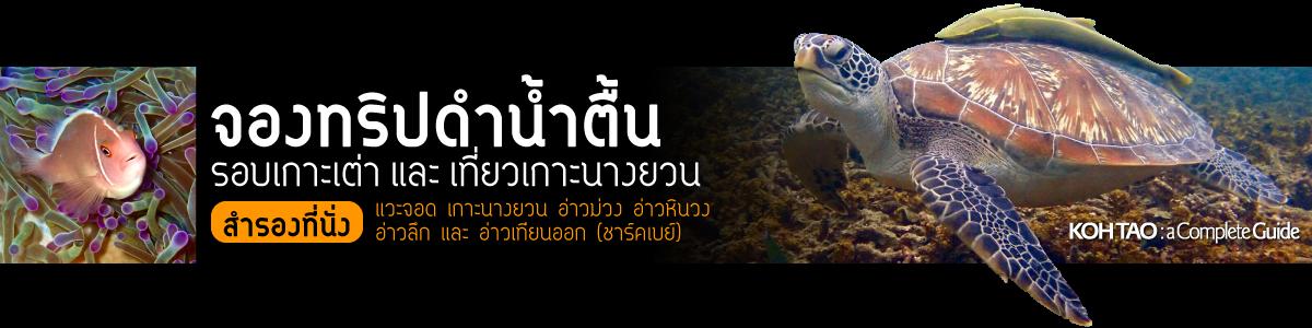 จองทริปดำน้ำตื้นรอบเกาะเต่า และ เที่ยวเกาะนางยวน