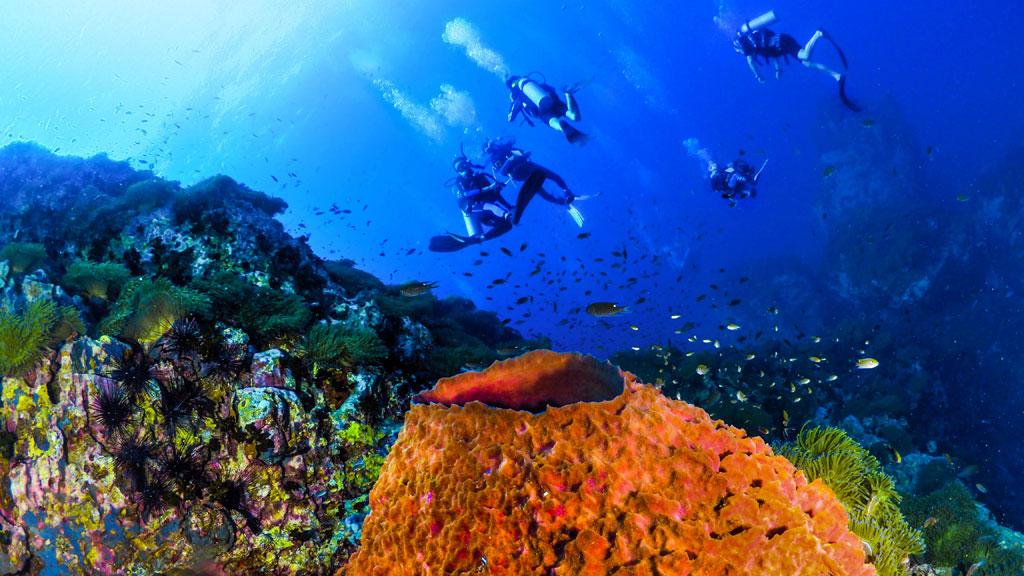ฟันไดฟ์ ดำน้ำที่เกาะเต่า
