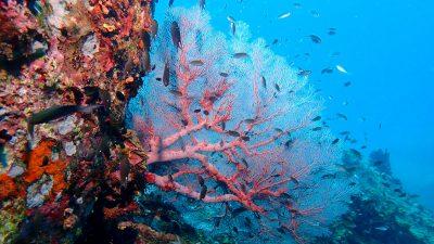 สิ่งมีชีวิตใต้ทะเลของเกาะเต่า