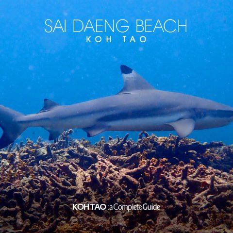 Blacktip reef shark – Sai Daeng Beach, Koh Tao
