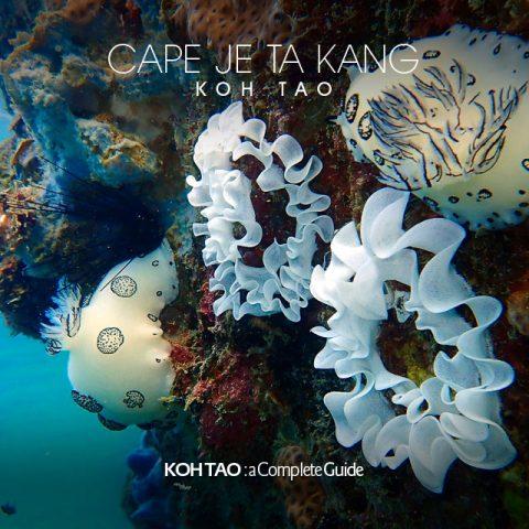 Polka-dot nudibranch, Cape Je Ta Kang, Koh Tao