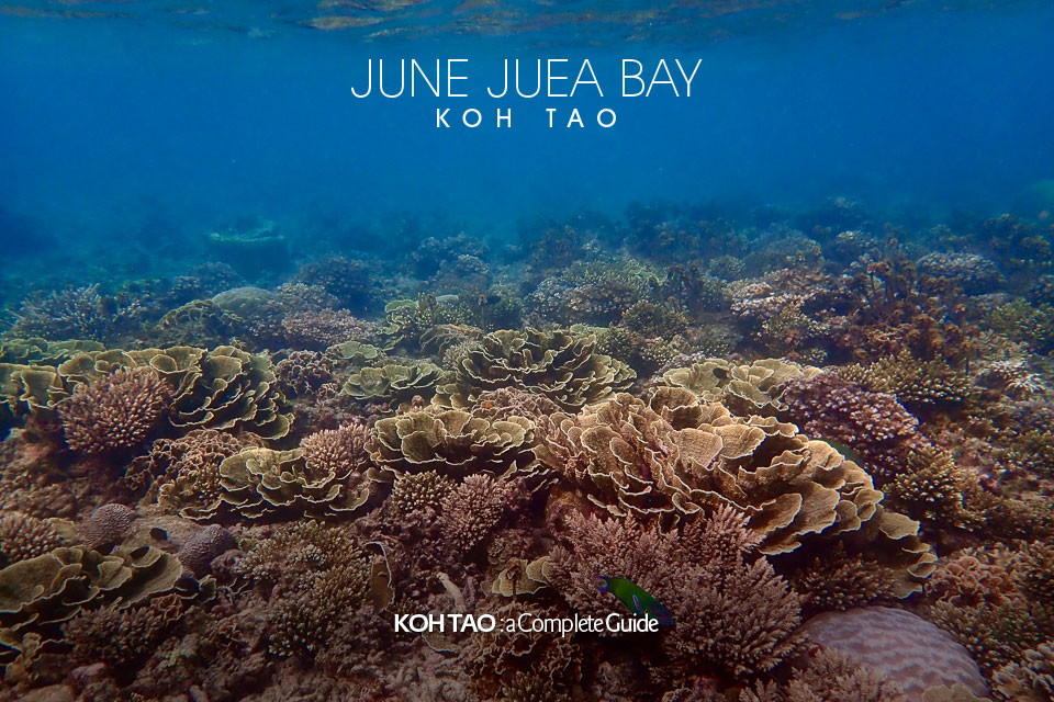 Hard coral – June Juea Bay, Koh Tao