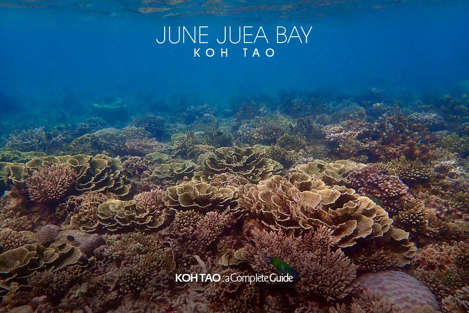 Hard coral – June Juea Bay, Koh Tao