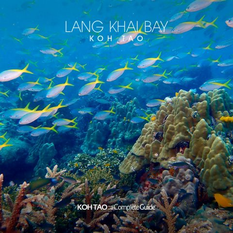 School of fish – Lang Khai Bay, Koh Tao