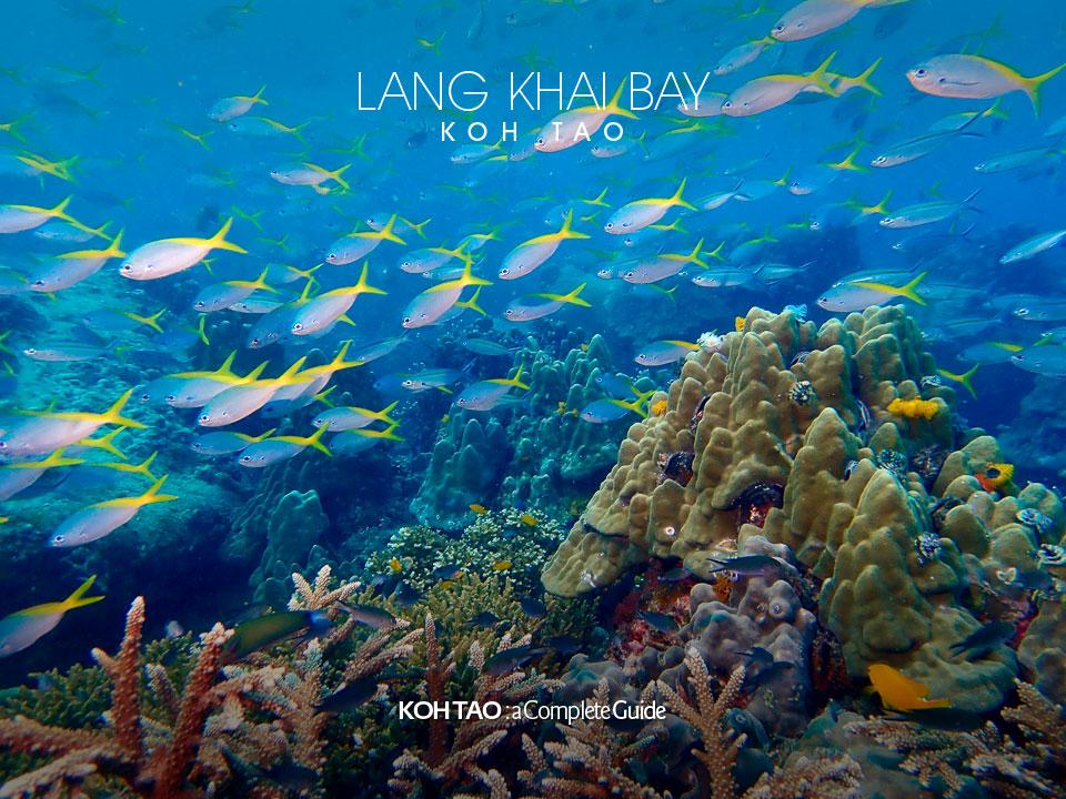 School of fish – Lang Khai Bay, Koh Tao