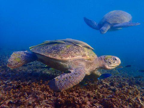Koh Tao - Turtle Island