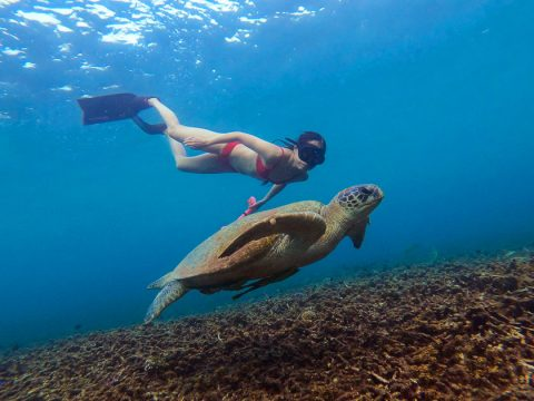 Snorkelling Koh Tao with a sea turtle