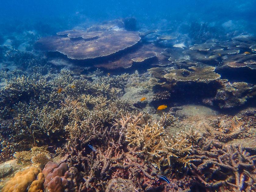 Shark Island, Koh Tao Underwater