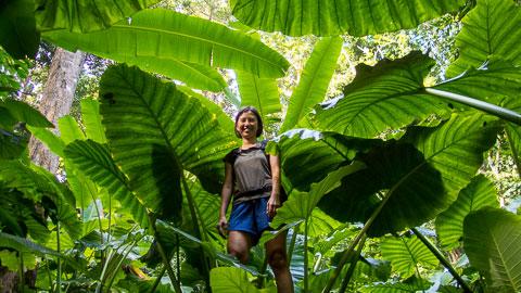 Koh Tao Hiking Tour