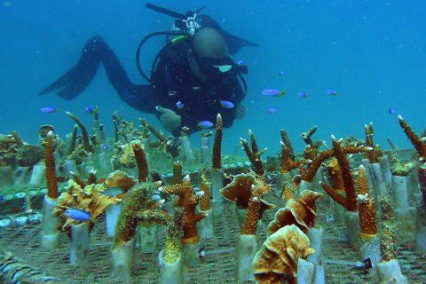 Big Blue Diving Resort Koh Tao