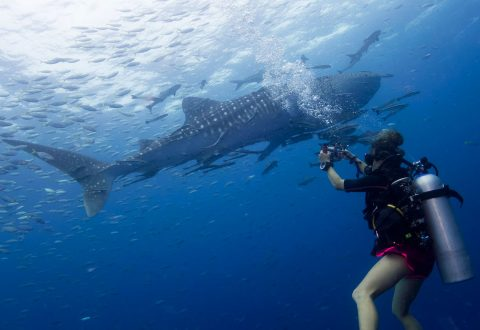 Koh Tao Diving Schools - Big Blue Dive Resort, Koh Tao