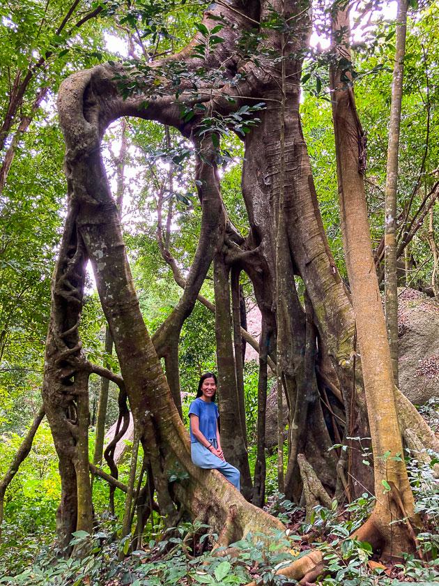 Grape Viewpoint hiking trail, Koh Tao