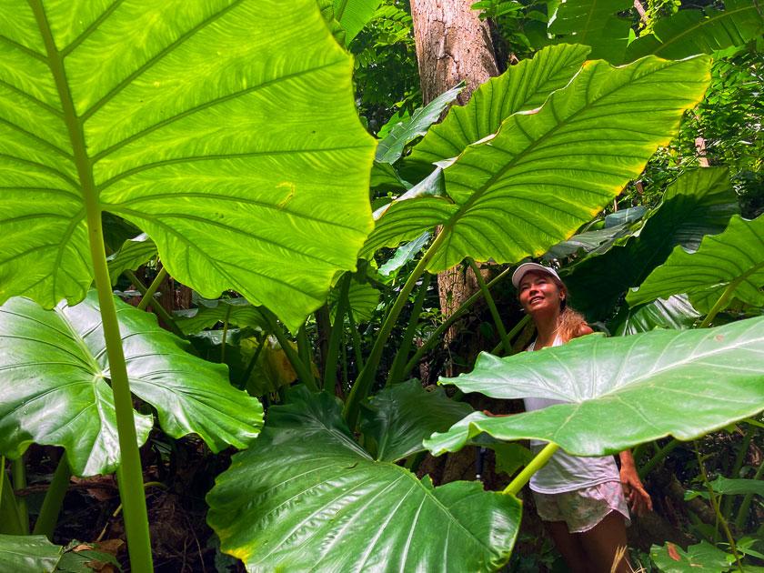 ไฮกิ้งเกาะเต่า เดินป่า Grape Viewpoint ป่าบอน