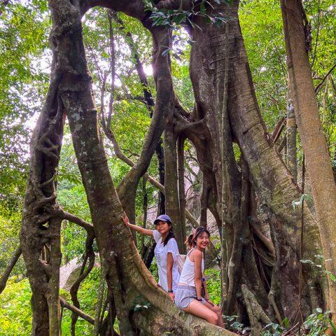 ไฮกิ้งเกาะเต่า เดินป่า Grape Viewpoint